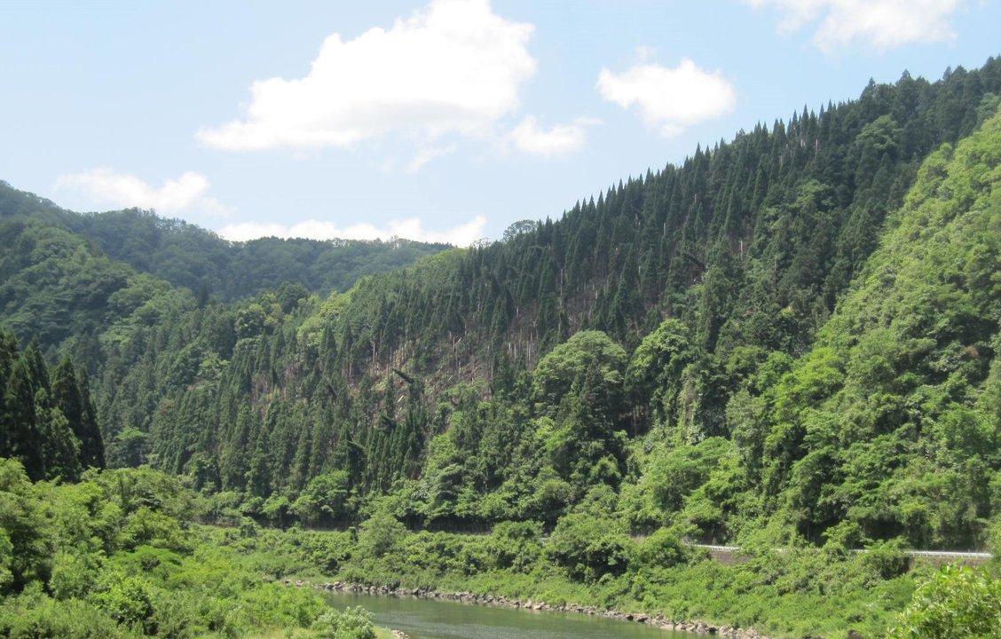 写真中央 : 雪害により杉の木が倒されて山肌が露出している